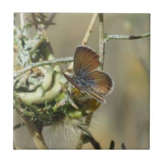 Western Pygmy Blue Butterfly Tile