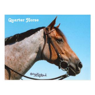 Western Quarter Horse Postcard