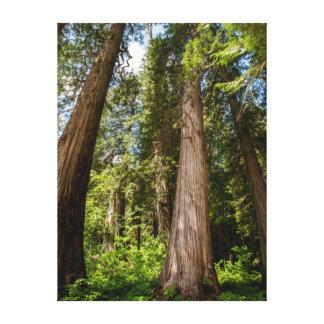 Western Red Cedar Trees Canvas Print