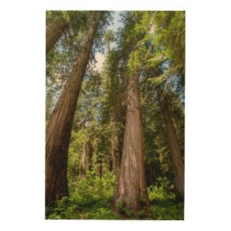 Western Red Cedar Trees Wood Wall Art