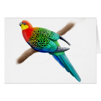Western Rosella Parrot Card