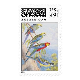 Western rosella (Platycercus icterotis), Pale-head Stamp