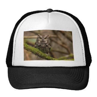 Western Screech Owl Hats