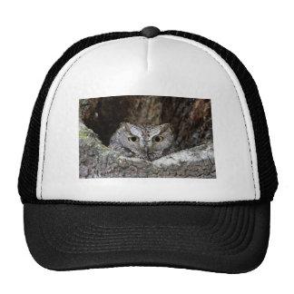 Western Screech Owl Trucker Hats