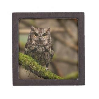 Western Screech Owl Keepsake Box