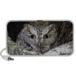 Western Screech Owl Mini Speakers