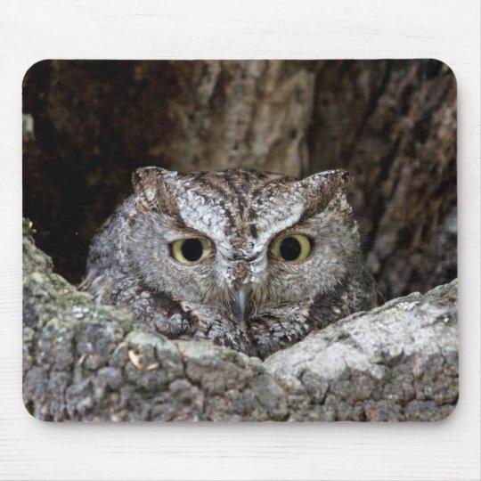 Western Screech Owl Mouse Pad