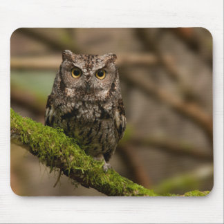 Western Screech Owl Mouse Pad