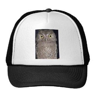 Western screech owl, Otus kennicottii, California, Mesh Hats