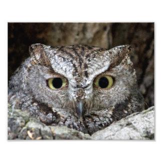 Western Screech Owl Art Photo