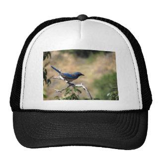 Western Scrub Jay 2 Trucker Hat
