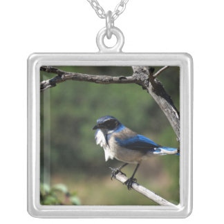 Western Scrub Jay 8 Square Pendant Necklace