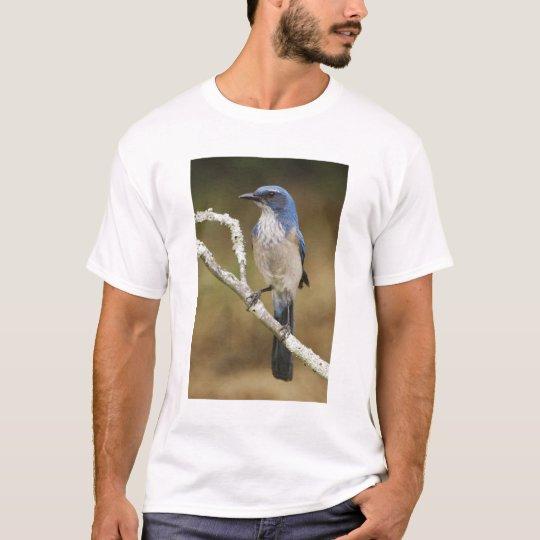 Western Scrub-Jay, Aphelocoma californica, adult T-Shirt