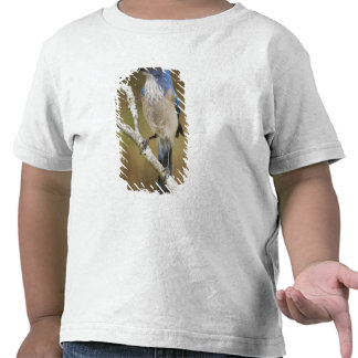 Western Scrub-Jay, Aphelocoma californica, adult T-shirts