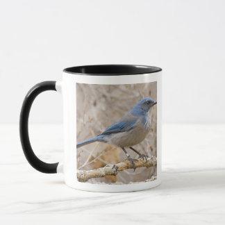 Western Scrub Jay Aphelocoma californica) Mug