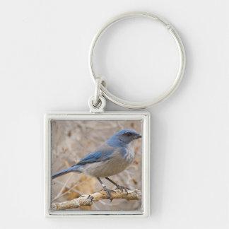 Western Scrub Jay Aphelocoma californica) Silver-Colored Square Keychain