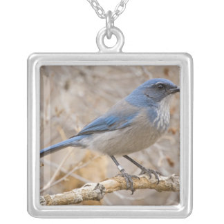 Western Scrub Jay Aphelocoma californica) Silver Plated Necklace