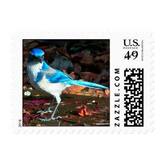Western Scrub Jay Postage Stamps
