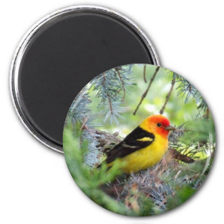 Western Tanager 2 Inch Round Magnet