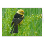 Western Tanager Greeting Cards