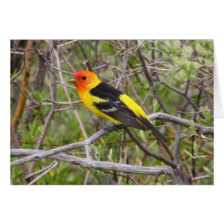 Western Tanager II Card