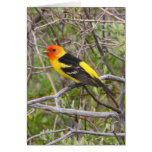 Western Tanager II Greeting Card