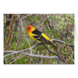 Western Tanager II Greeting Cards