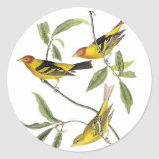 Western Tanager - John James Audubon Classic Round Sticker
