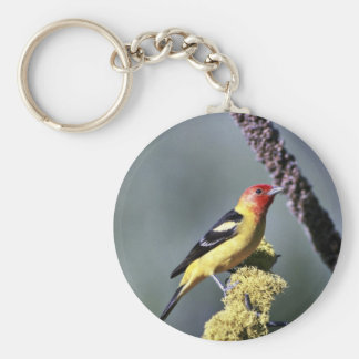 Western tanager key chain