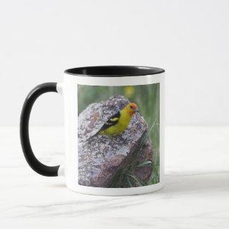 Western Tanager, Piranga ludoviciana, adult male Mug