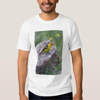 Western Tanager, Piranga ludoviciana, adult male T Shirt