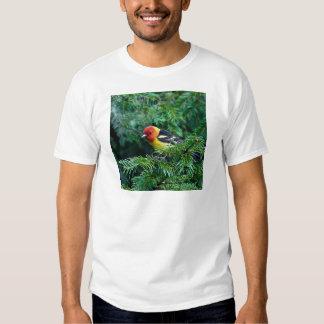 western Tanager Shirt