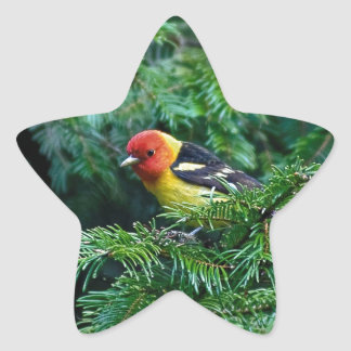western Tanager Star Sticker