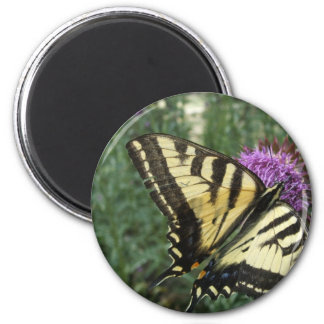Western Tiger Swallowtail Butterfly 2 Inch Round Magnet