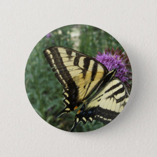 Western Tiger Swallowtail Butterfly Button