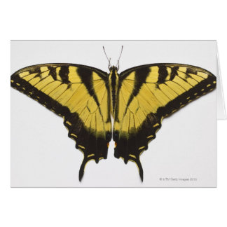 Western Tiger Swallowtail Butterfly Cards