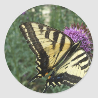 Western Tiger Swallowtail Butterfly Classic Round Sticker