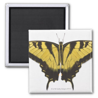 Western Tiger Swallowtail Butterfly Refrigerator Magnets
