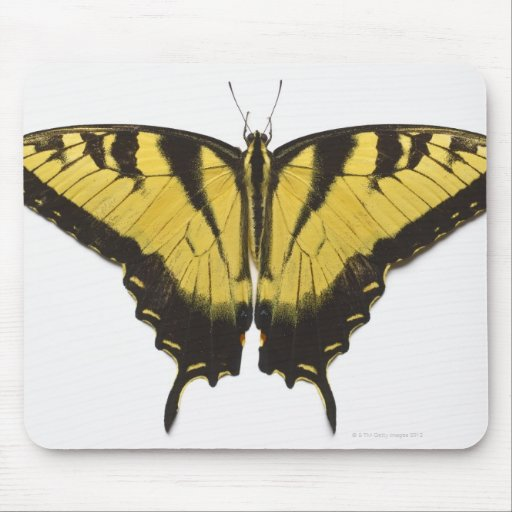 Western Tiger Swallowtail Butterfly Mouse Pad