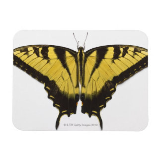 Western Tiger Swallowtail Butterfly Rectangular Magnets