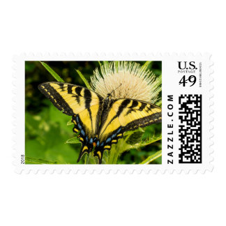Western Tiger Swallowtail on a thistle Postage Stamp