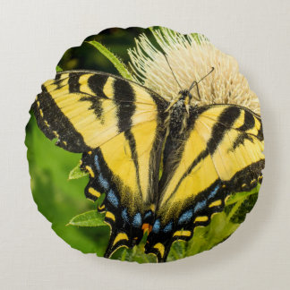 Western Tiger Swallowtail on a thistle Round Pillow