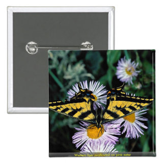 Western tiger swallowtail on pink aster pinback button