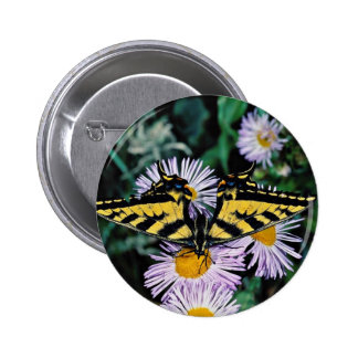 Western tiger swallowtail on pink aster  flowers pinback buttons