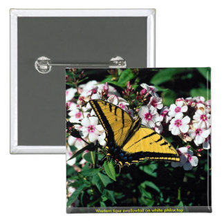 Western tiger swallowtail on white phlox top buttons