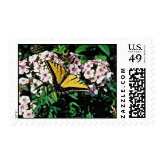 Western tiger swallowtail on white phlox top  flow stamps