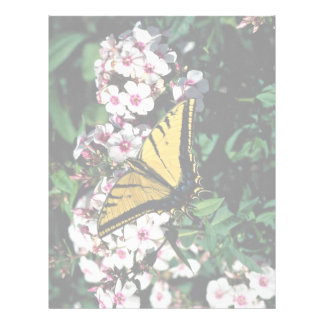 Western tiger swallowtail on white phlox top letterhead