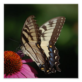 Western Tiger Swallowtail Print