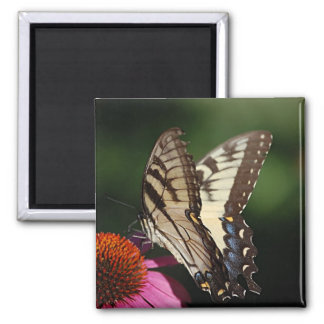 Western Tiger Swallowtail Square Magnet Refrigerator Magnets