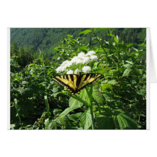 Western Tiger Yellowtail Butterfly Greeting Card